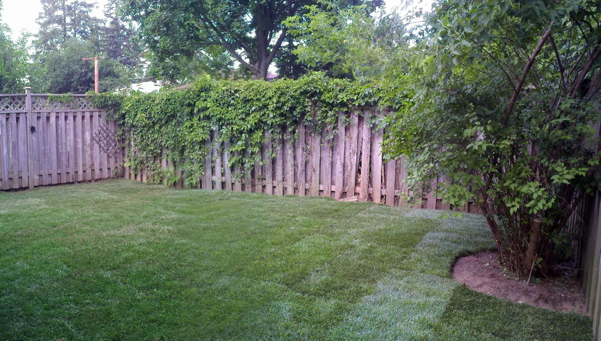 Backyard cleanup. A garden renovation project in London Ontario.